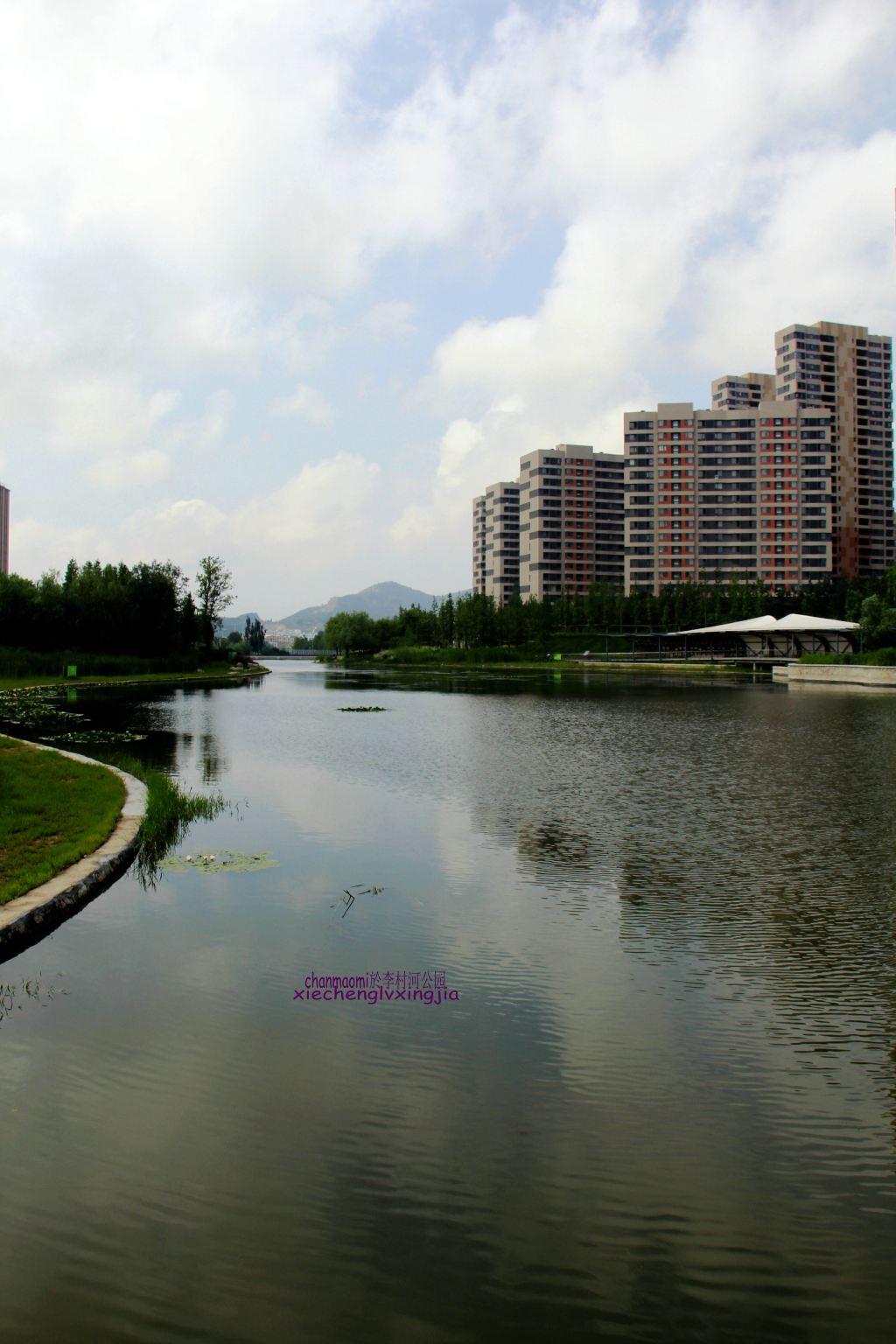 青岛#随手拍#李村河公园里盛开的夏荷