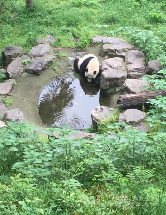 【位置及环境】南京有名的动物园,貌似是以前玄武湖里面的搬过来的。地方还挺好找的,一号线地铁坐到红山动物园站下来,跟着人流走就能到北门了。里面地方很大,真的是很大,所以如果去玩,起码要玩一整天才能把所有的都玩完。里面貌似是依傍着一座山来安置的不同的动物的地方,所以爬得比较累。动物的品种也算是南京最多的了,熊猫,猴子,狼,大象,长颈鹿,黑熊,老虎,孔雀,飞禽类,还有爬行馆里面好多爬行动物还有各种鱼,很适合带着孩子来,可以认到好多动物,科普知识。里面的爬行馆是要出示门票或者年卡的,所以买了门票要保存好,不然要另