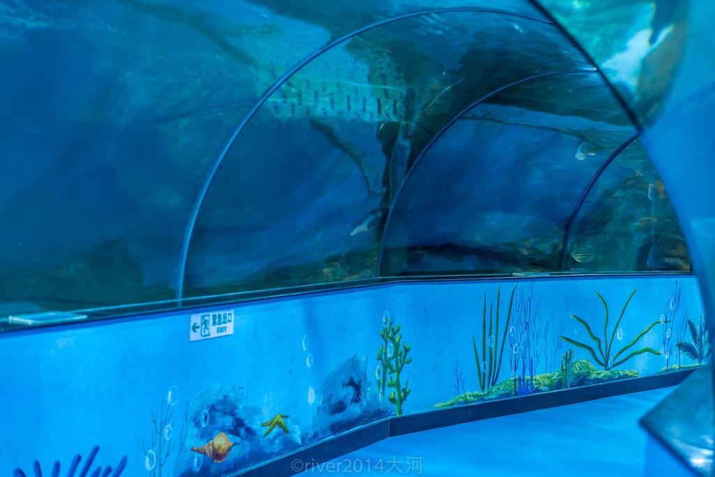 透明玻璃做成的海底隧道,游客从中间经过,身边是各种海洋生物,一条