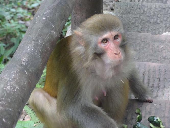 刚一到售票处,大山里的清凉让我们都穿上了长袖。准备沿着金鞭溪一路走到百龙天梯。全程六公里,时间是两小时左右。自认我们是走得很快的大长腿。潺潺的小溪旁有小猴子在树上窜来窜去。(图)小猴子不怕人,所以游客都喜欢喂小猴子零食。可是小猴子竟然不吃我们手里的鱼肠。赤裸裸的被嫌弃了。一路都有导游在解说这个山那个山。我们光明正大的蹭了导游。每隔一段都有食物卖。所以大家不用担心饿肚子也不要带太多零食进山。如我们。背了一书包,路上只想着怎么快点解决这些零食来减轻负担.