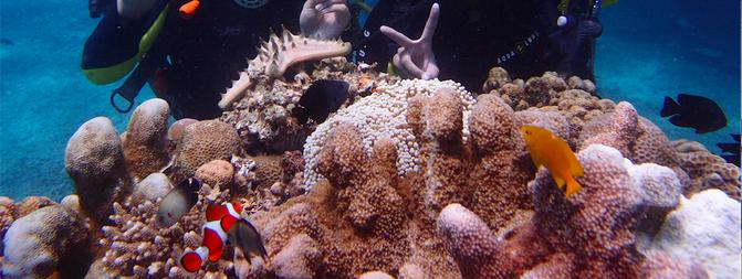 珊瑚,鱼群,海蛇,海葵我当时满脑子都是海底总动员233333