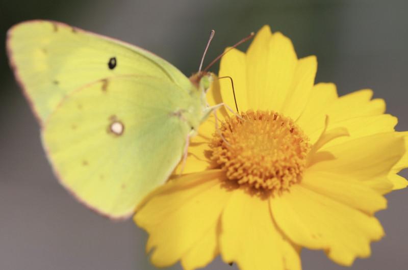 蝴蝶(大蜀山森林公园)