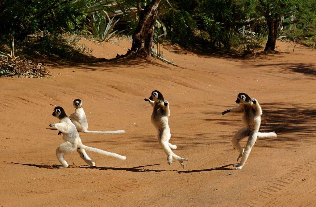 拉努野生动物园