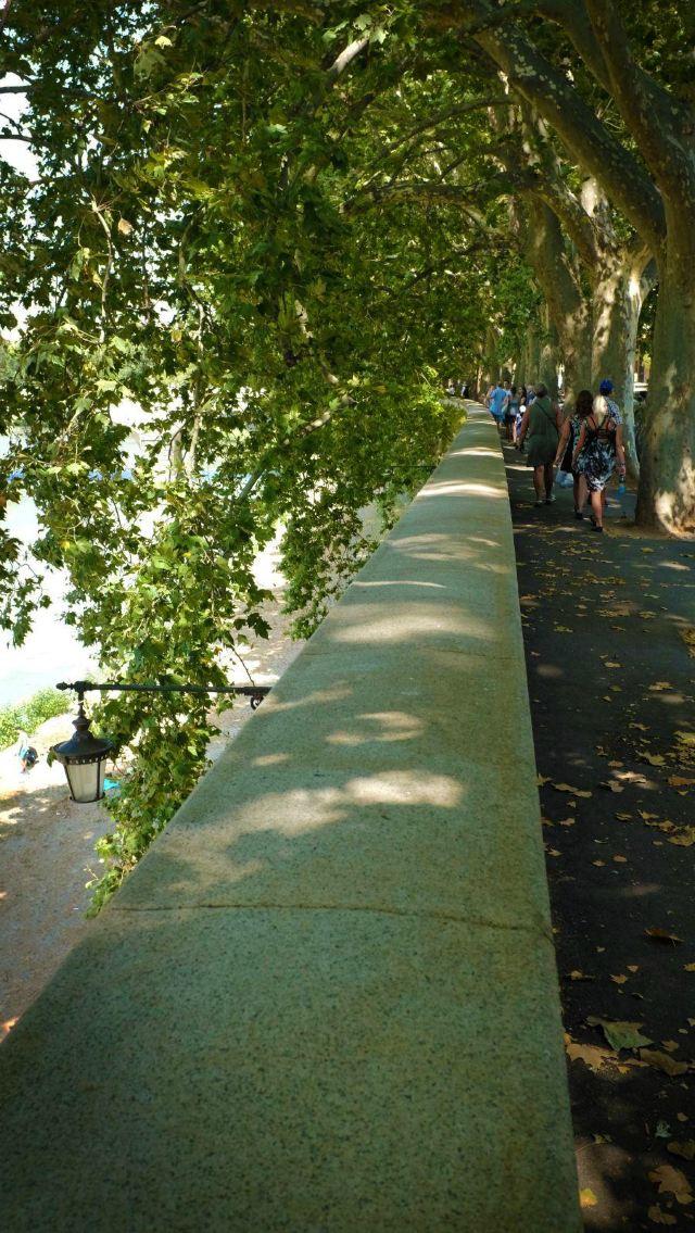 巨大的梧桐树确实为人们带来了几丝凉意,树下有黑人摆设的小摊,出售着
