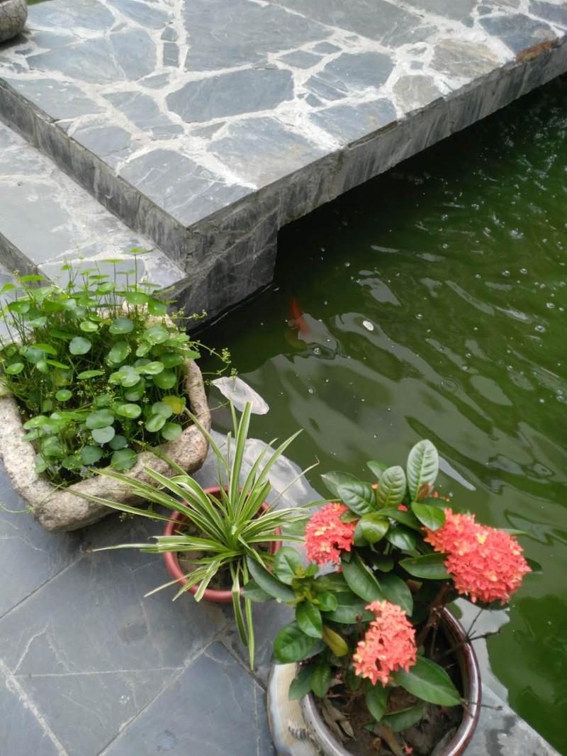 上海海上花岛生态度假酒店