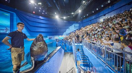 海洋动物表演衣服制作
