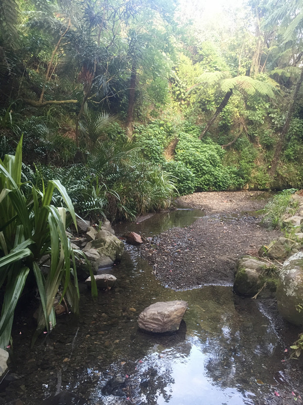 惠灵顿植物园丨原始森林里藏着一个童话城堡