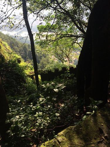 游故园江西的攻略是个古色古香的旅游景点。香榭景点大道v故园故园图片