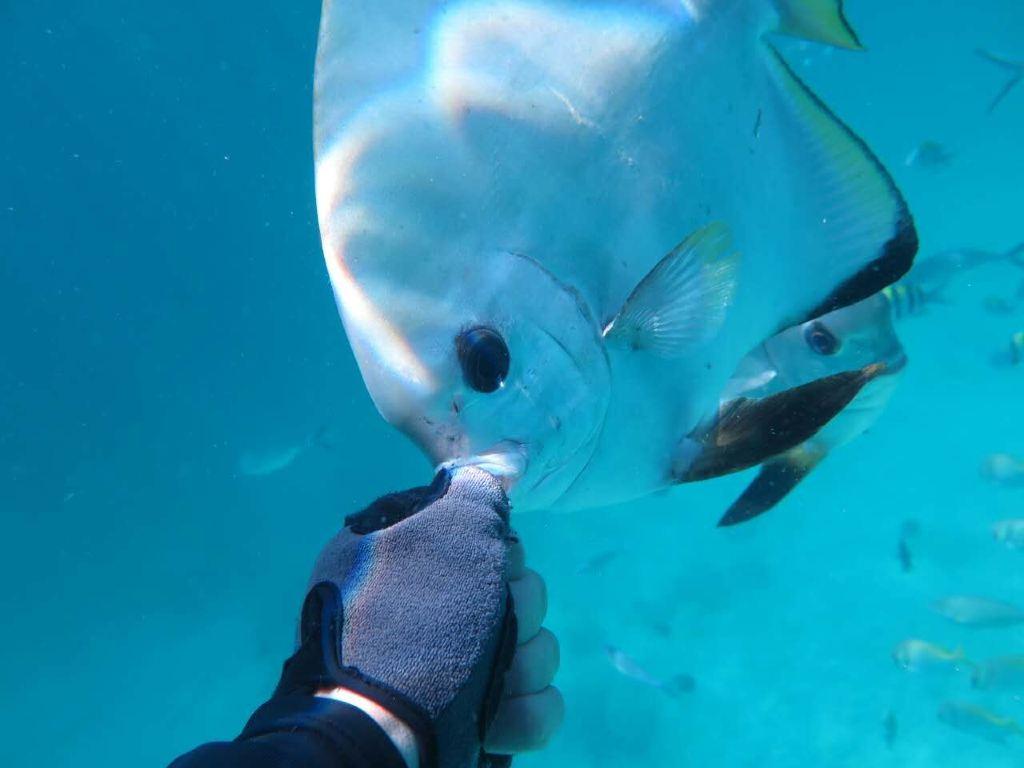 说起仙本那,都会让人想起那一个个玻璃海中的小岛,还有一个个不亚于马尔代夫的度假村,卡帕莱、马达京、POMPOM、诗巴丹马布。很多人都没想到,在马布岛上,还有一个地方可以让我们无比亲近原始的海洋生活。 如果你是重视旅行体验,希望深度的了解和体验仙本那的人文,而不是被高级酒店束缚在狭小的区域,我们这一次的旅程就提供了这样的选择。在马布岛上有一间民宿水屋马布天堂度假村,虽然不是最好的,但是位置,体验是最好的,它的位置在岛的西面,在房间门口就可以看到美丽的海上日出日落,经常能看到一些海龟游过你的房间前往岛的西面觅