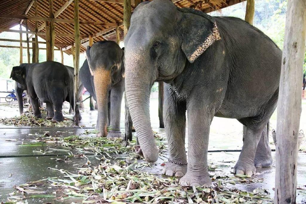 大象 动物 1024_682