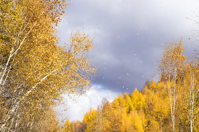 一阵阵的秋风中,树叶纷纷扬扬地在空中起舞,卸妆是为了漫长的冬天