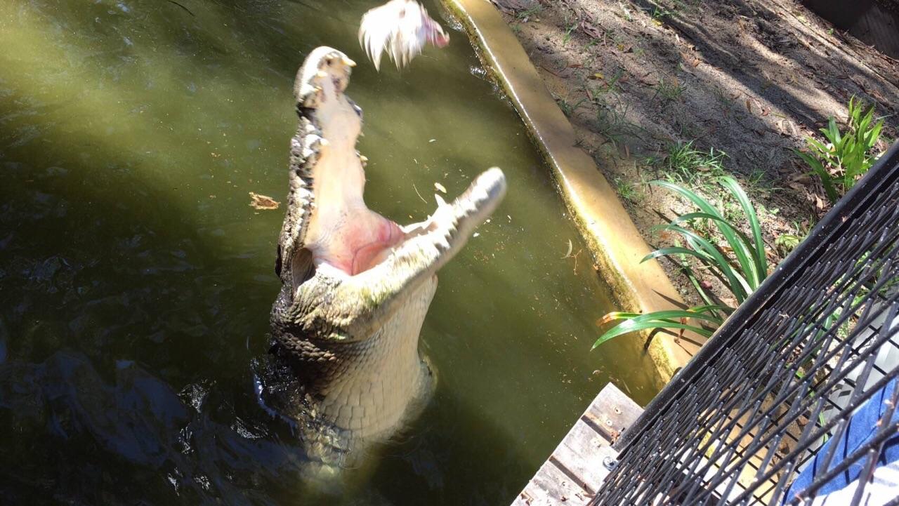 哈德利鳄鱼农场  Hartley's Crocodile Adventures   -4