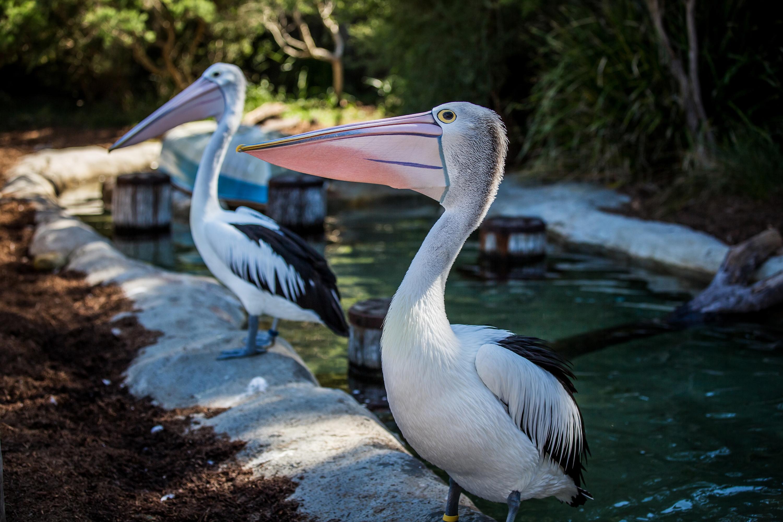 塔龙加动物园  Taronga Zoo   -2