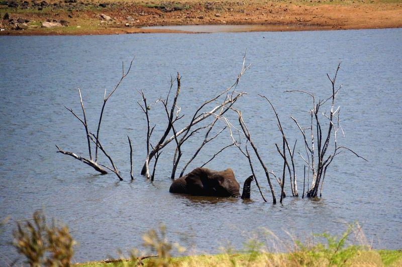 有水源的地方更容易发现动物