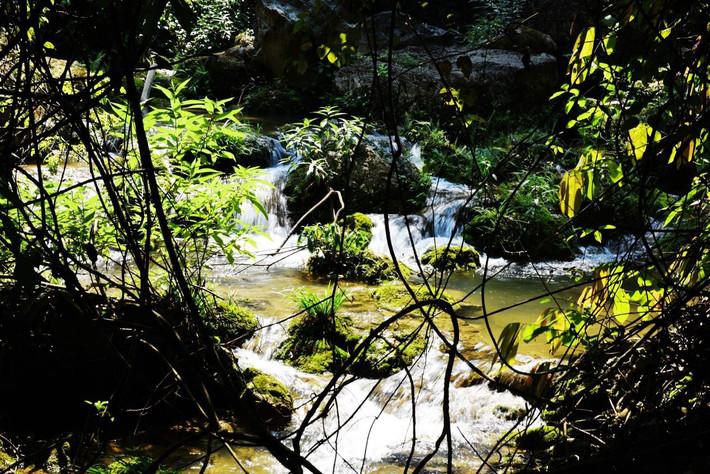水上森林,石图片