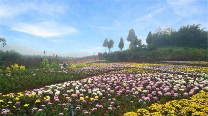 """凤凰花海""""花漫大地""""四季花卉景观园位于重庆市沙坪坝区凤凰镇胡南坝"""