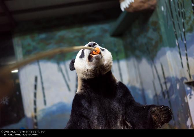 长隆野生动物世界『我和你