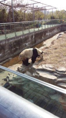 【携程攻略】宁波雅戈尔动物园图片