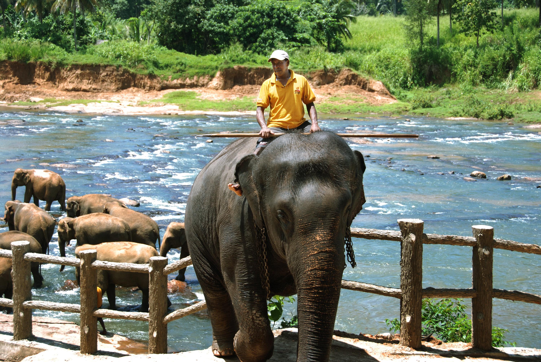 品纳维拉大象孤儿院  Pinnawela Elephant Orphanage   -2