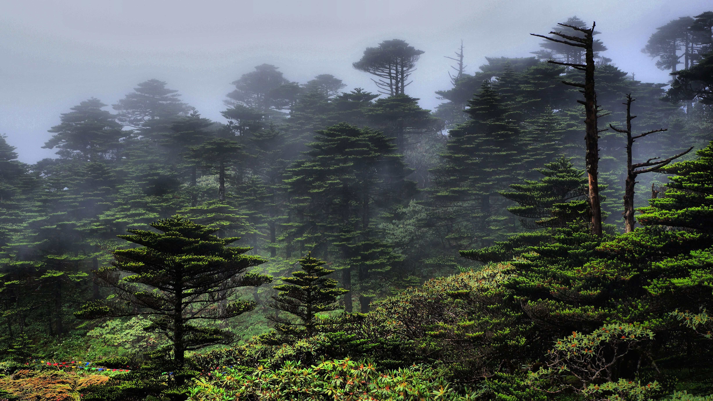 qq头像英国风景森林