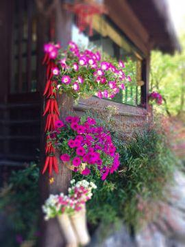 北仑森林植物园门票,宁波北仑森林植物园攻略/地址