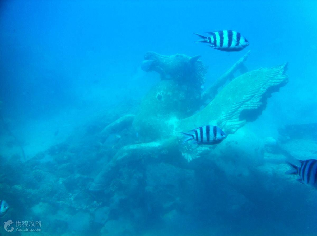 土耳其飞机 潜水