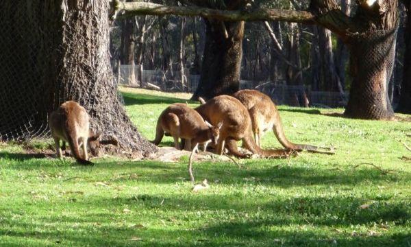 一起同行的朋友和我说:来峡谷野生动物园之前,我对动物园的概念有两种:一种是关在笼子里的动物由外面的游人参观拍照,一种是被关在巴士里的游人参观园内看似自由的动物。峡谷动物园向游人呈现了一个新的概念,人和动物都可以是自由的,可以是互动的。