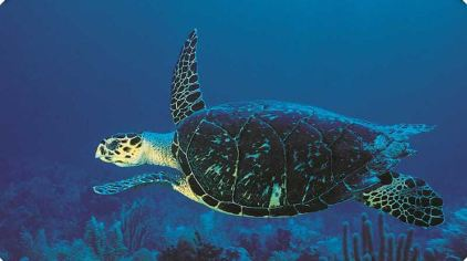 海底可爱动物图片