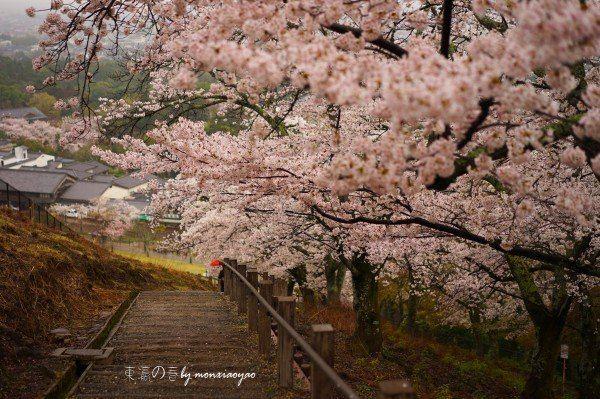 [mon小妖〕东瀛四月樱花漫--闺蜜日本关西赏樱之旅