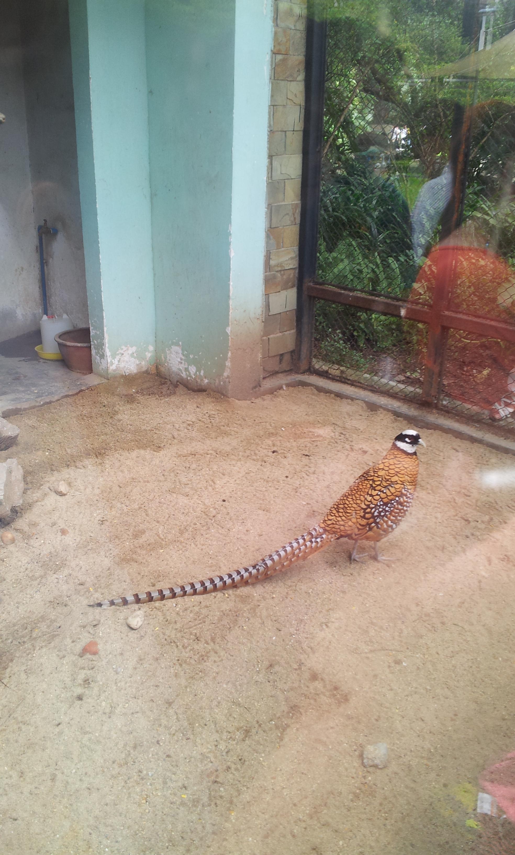 在这拍照 广州动物园