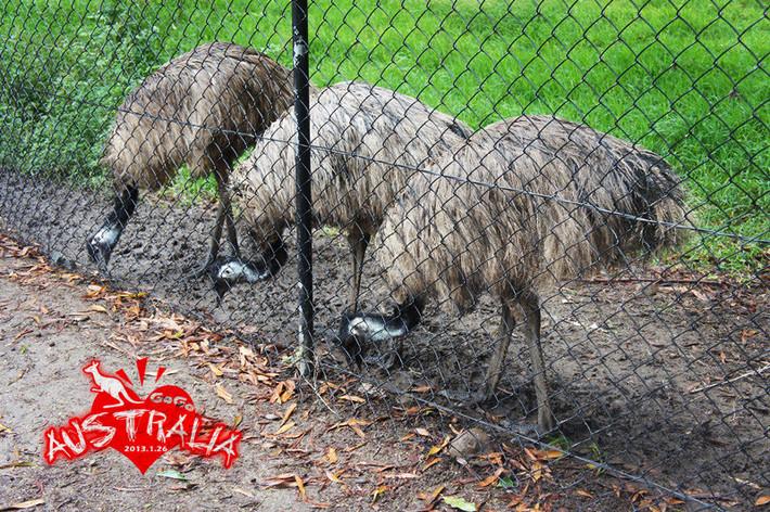 可伦宾野生动物园