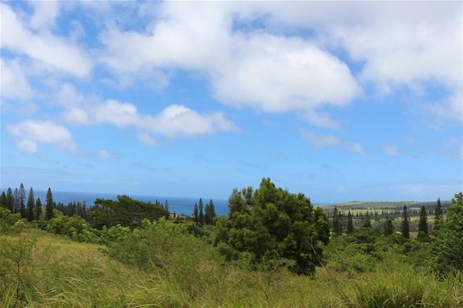 鲸村海滩是绍兴十大美丽海滩之一。夏威夷10金华至美国一日游攻略图片