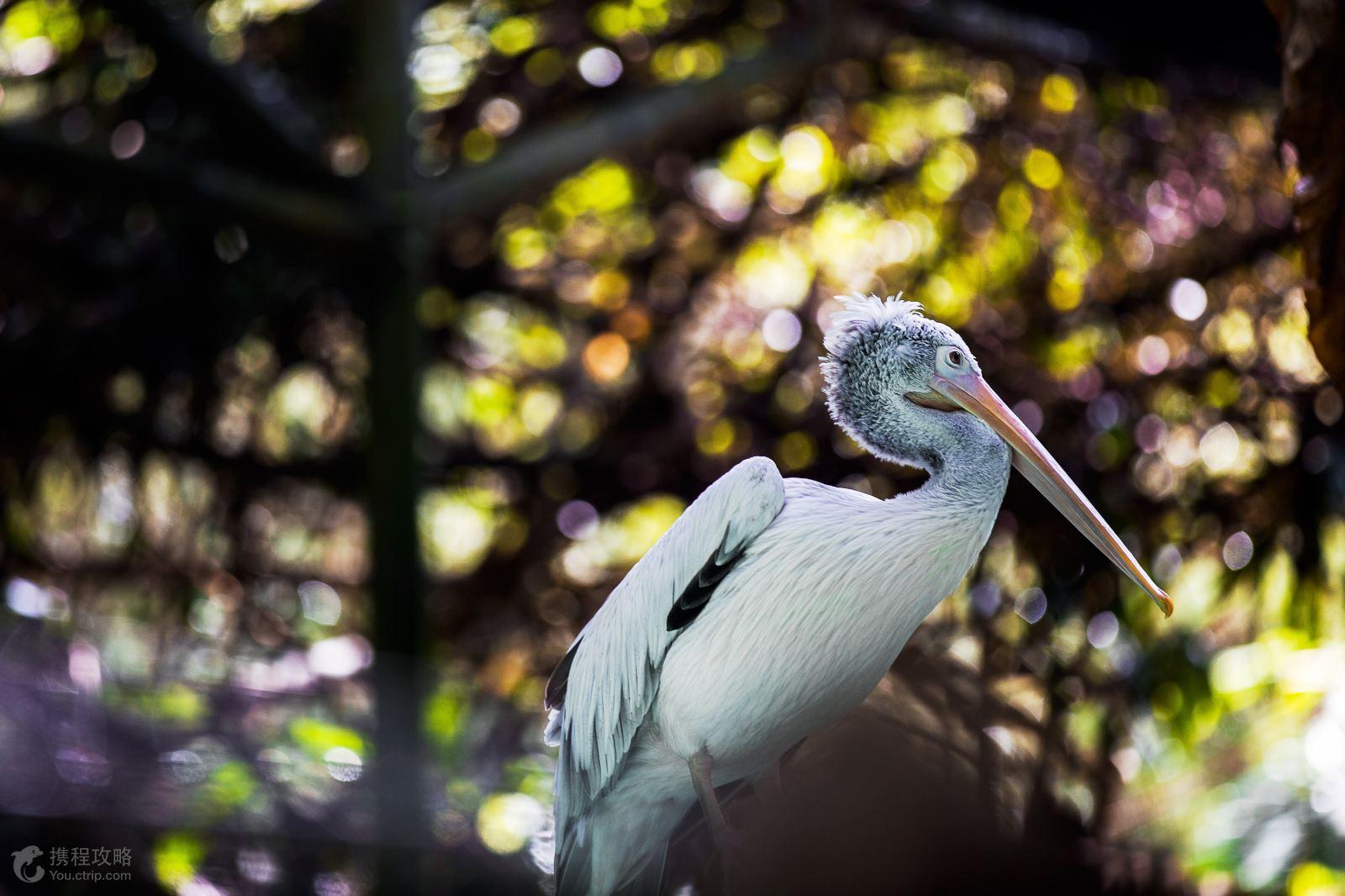 天然保护区和夜间动物园欣赏美景
