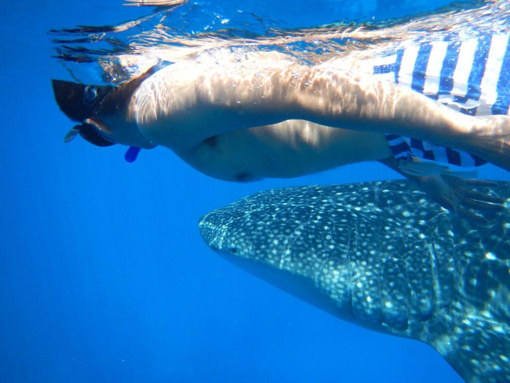 我的2014马尔代夫/巴厘岛/长滩岛/帕劳/雅浦-潜水游