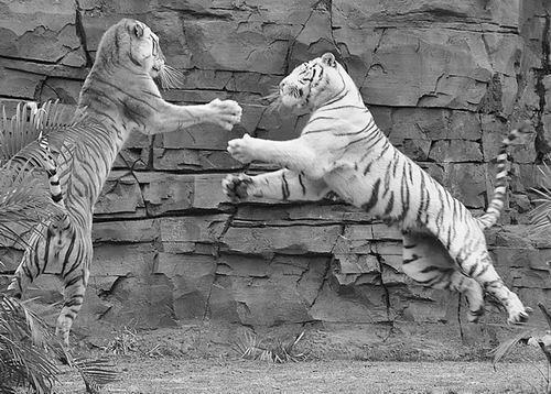 动物世界雄狮七兄弟下