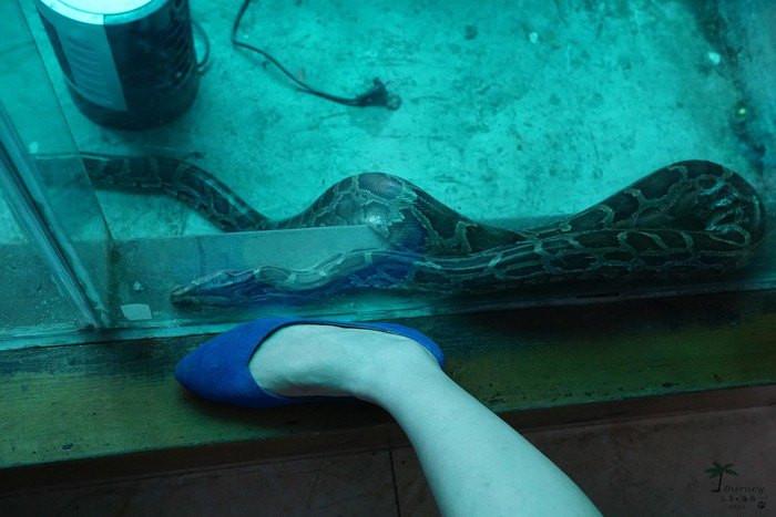 蟒蛇馆,里面有卖蛇油,蛇皮钱包的,与蟒蛇照相的,当然还有关着的大蟒蛇