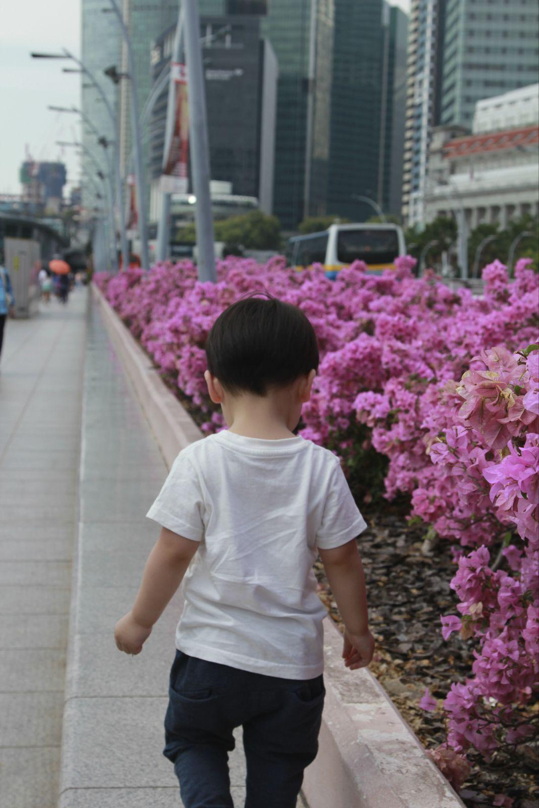 其结果我这个外国人感动涕零在这里长篇码字将新加坡歌颂.