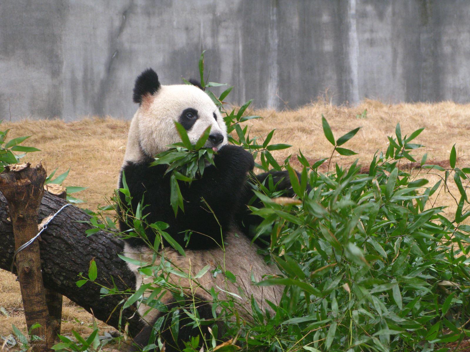 浙江安吉2日1晚跟团游·安吉竹海-九龙峡-高家堂-浙北大峡谷 五星
