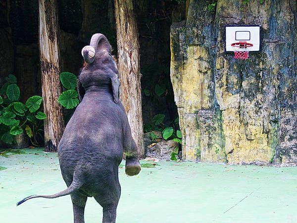 珍稀动物的天堂---长隆野生动物园