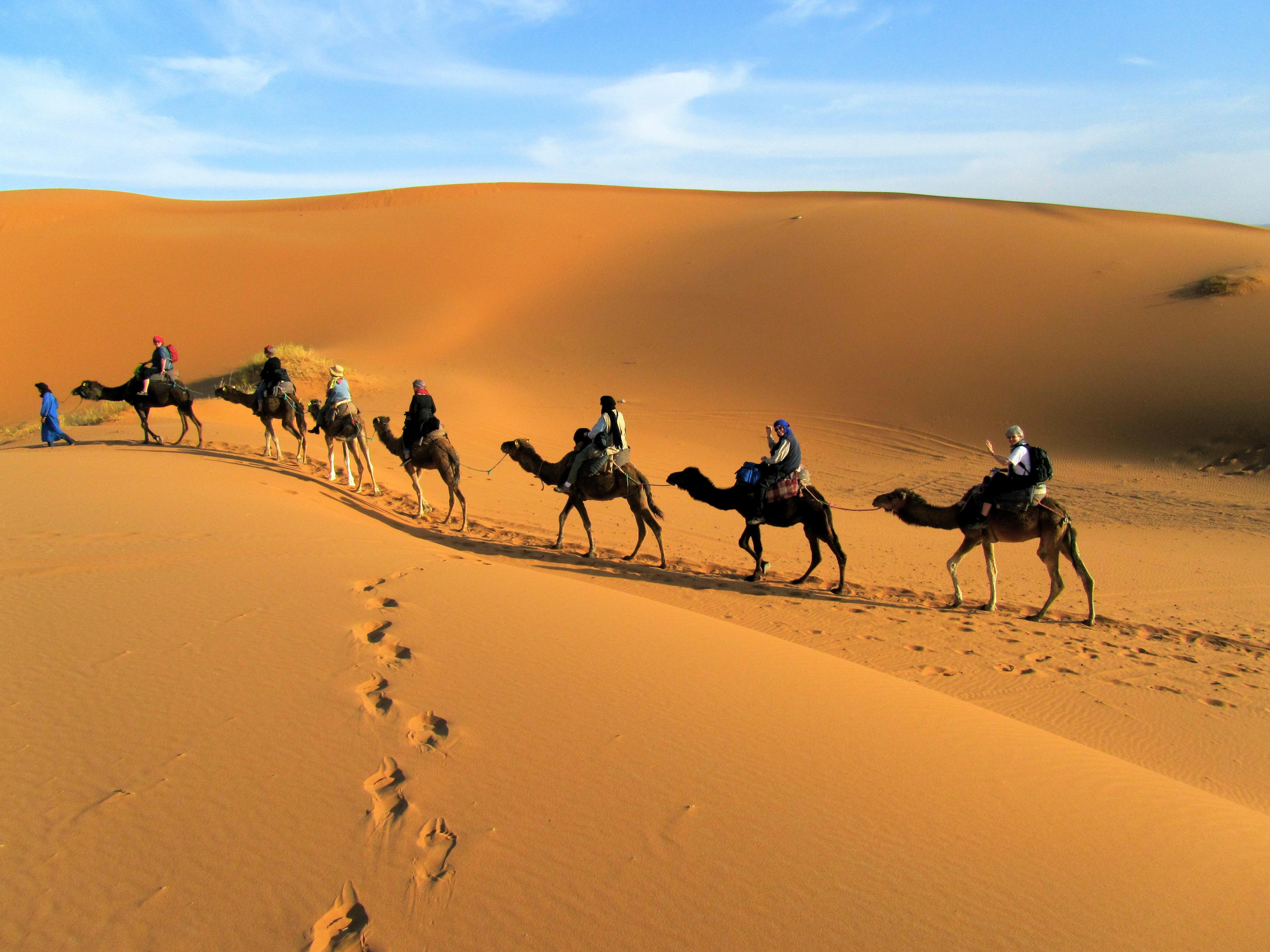 骆驼手绘彩色图片