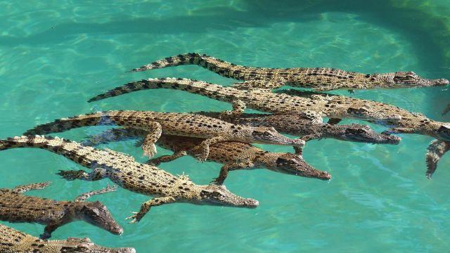 可可洛思鳄鱼湾主题公园
