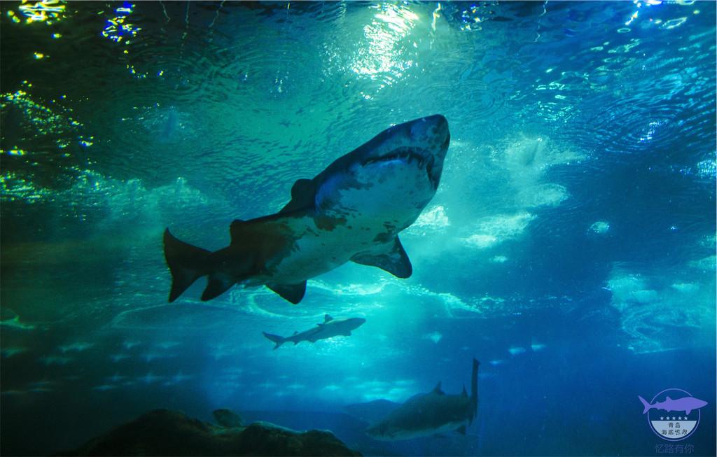 壁纸 海底 海底世界 海洋馆 水族馆 桌面 1024_653