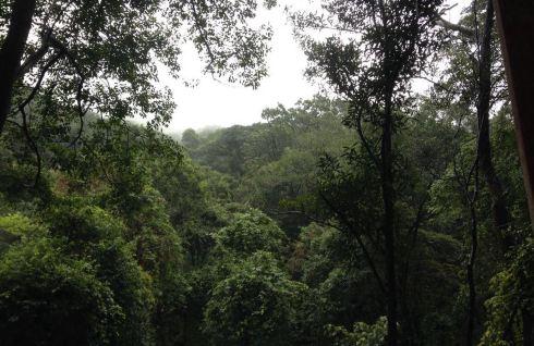 王子山森林公园门票_国庆节花都王子山森林公园游