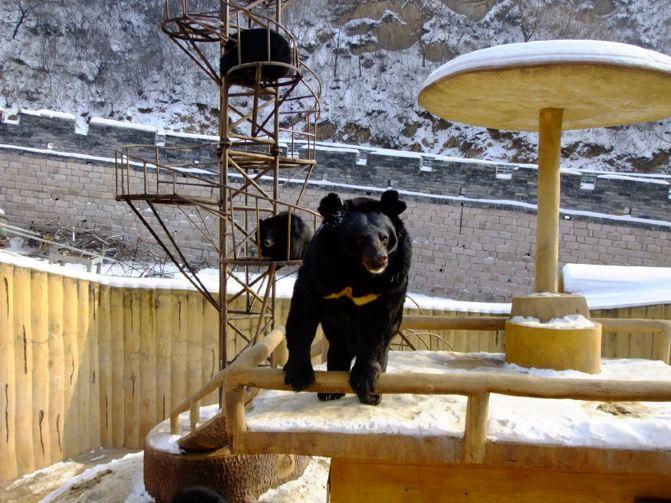 带着4岁半山顶登泰山北京游北京城-长城游记张家界女儿住宿攻略图片