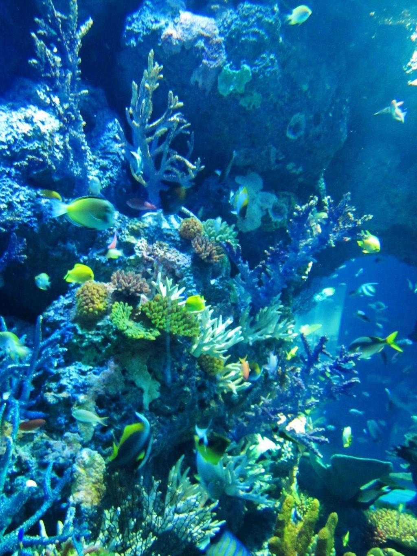 新加坡海族馆