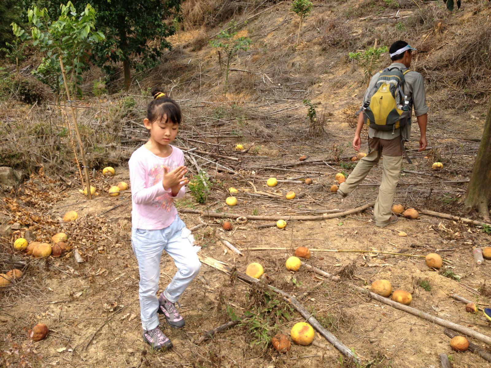 野生野长的柚子树下,一地的大小柚子,这可是孩子们袭击大人的炸弹