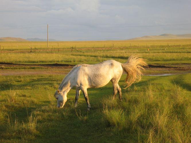 内蒙草原4日行----狼图腾拍摄地乌拉盖+蒙古汉城