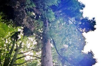 【携程攻略】南充金城山森林公园周边住宿