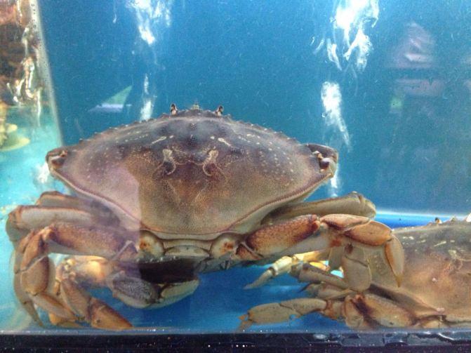 最美野生海洋动物名称标注