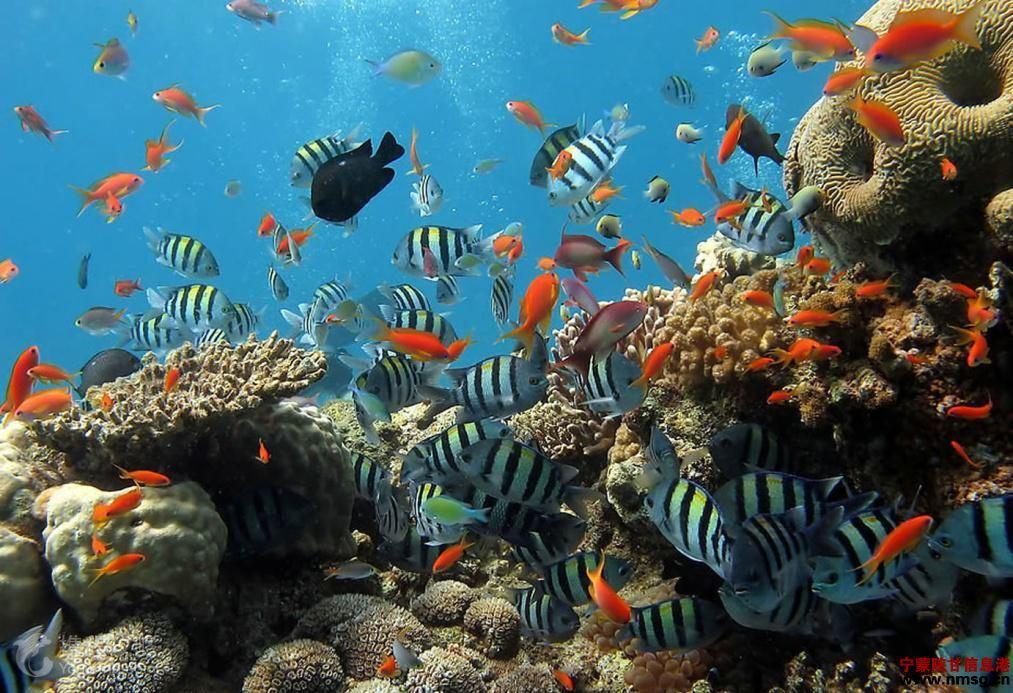 山东青岛 日照3日2晚跟团游·海底世界海洋公园,日照海滨浴场,五星